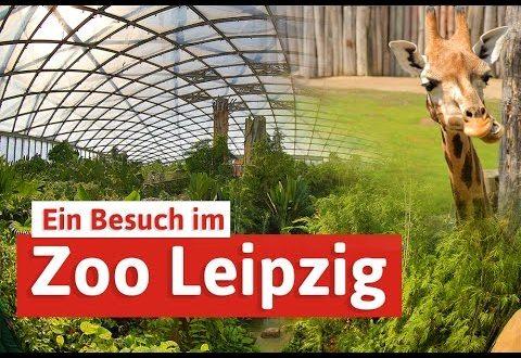 Leipziger Zoo - Städtereise mit Elefanten, Tigern & Co.