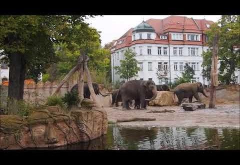 Eine wichtige Fusion: Die Berliner lernen die Leipziger Elefanten kennen