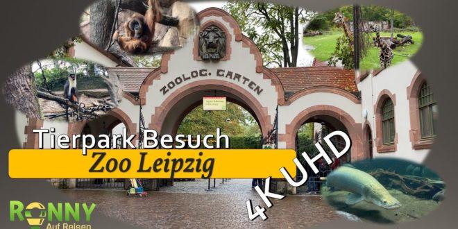 Leipziger Zoo Ein Tag im Leipziger Zoo Auf in die Wildnis Elefanten Baby Schimpansen und mehr