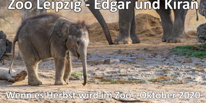 Unterwegs im Leipziger Zoo - Wenn der Herbst im Zoo kommt - GoPro Hero 9 Black Footage - Sony A6600