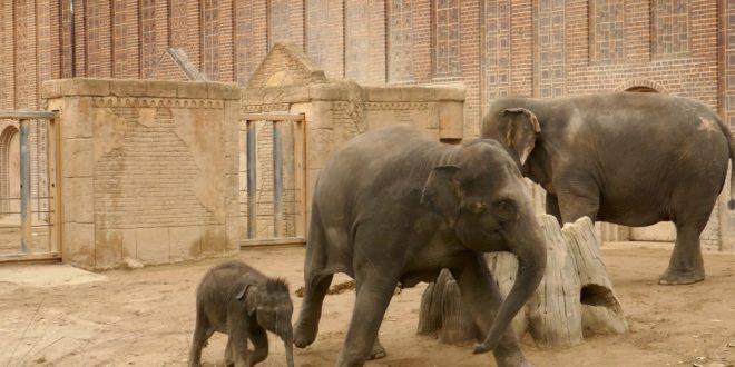 Zoo Leipzig, der kleine Elefant Kiran Film