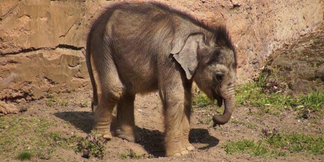 Elefantenbaby / Elefantenbaby Zoo Leipzig