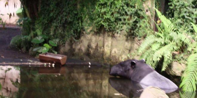 Gondwanaland Leipzig im Leipziger Zoo - Bootsfahrt