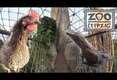 Mein Tag im LEIPZIG ZOO # Vlog04 I The Cheeky Fruechtchen