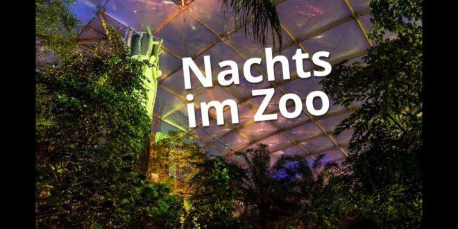 Tropische Lichter im Gondwanaland (Leipziger Zoo)