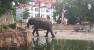 Ein Tag im Leipziger Zoo Kiran & Co4🐘🤗
