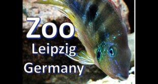 Fisch im Leipziger Zoo Leipzig, Deutschland, ein kurzer Blick 2020