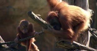 Hoffnung ist grün - Der Leipziger Zoo steht kurz vor der Eröffnung (Folge 874) |  Elefant, Tiger & Co. |  MDR