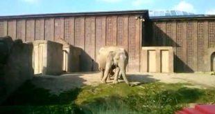 Leipzig Zoo, Elefanten