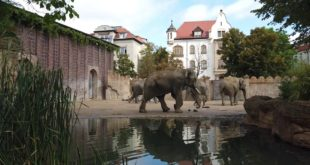 Leipziger Zoo 2019