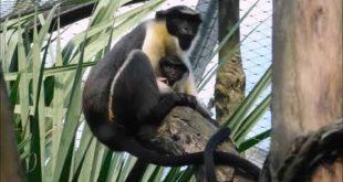 Leipziger Zoo Bilder Video