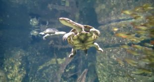 Schildkröten im Leipziger Zoo