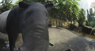 Tapir 360 Grad Leipziger Zoo
