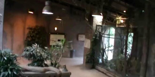 Leipziger Zoo, Olifanten