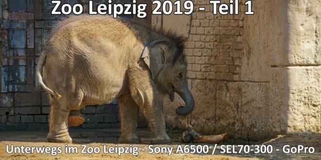 Unterwegs im Leipziger Zoo - Teil 1 2019 - Sony A6500 SEL70-300 - GoPro - Auf den Spuren der Natur