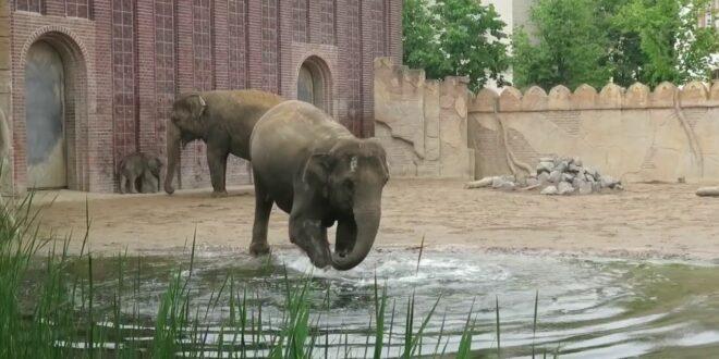 Elefant Rani badet, Leipziger Zoo, Kiran, Don Chung und Voi Nam