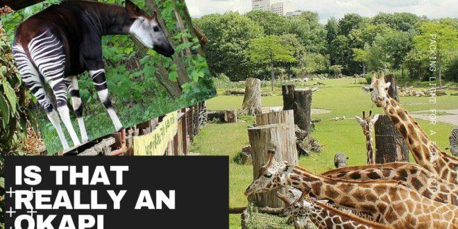 Leipziger Zoo / OKAPI entdecken / Was tun mit Kindern in Deutschland?