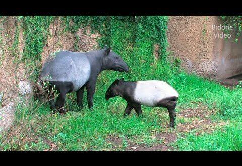 Zoo Leipzig - 3/3 - im Sommer - Sommerzeit