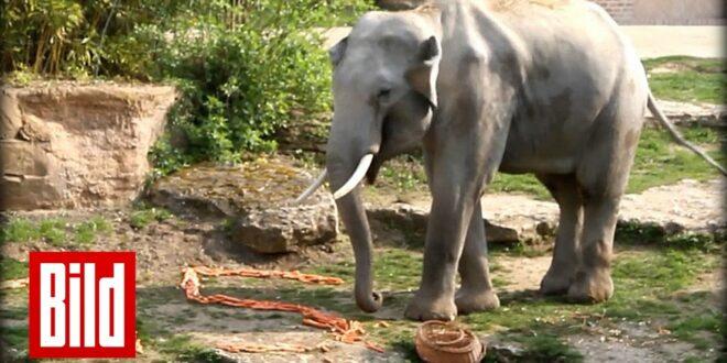Elefantengeburtstag im Leipziger Zoo
