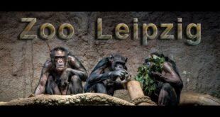 Leipziger Zoo |  Leipzig |  Zoo |  Besichtigung |