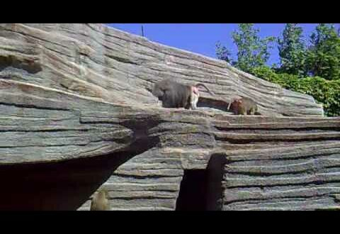 Paviane im Leipziger Zoo