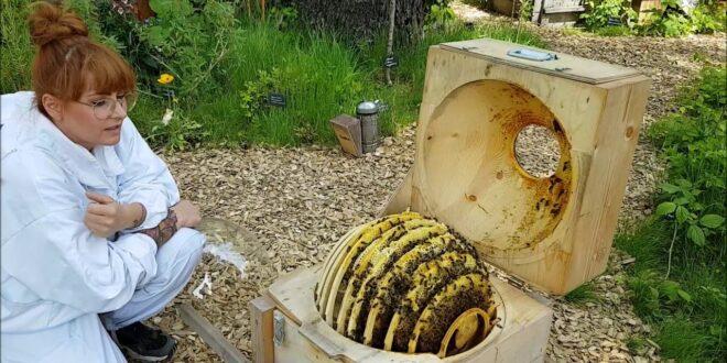Video aus dem Bienengarten im Leipziger Zoo am Weltbienentag