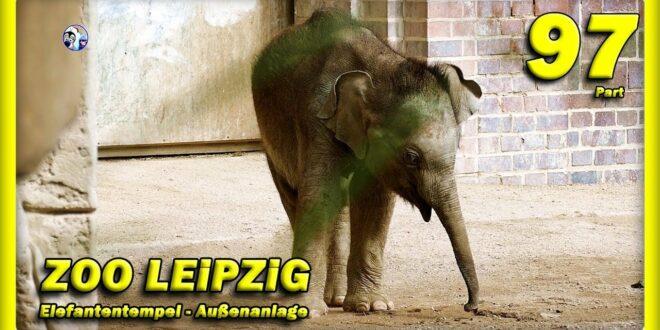 🔴 ZOO LEiPZiG • Elefantenbaby Kiran, Rani, Don Chung und Voi Nam - зоопарк - слон - Tiere