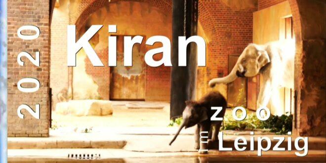 ZOO Leipzig 2020 🐘 Kleiner Elefant Kiran im Elefantenhaus