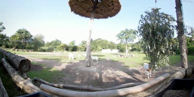 360 Grad Kiwara Savanne im Leipziger Zoo