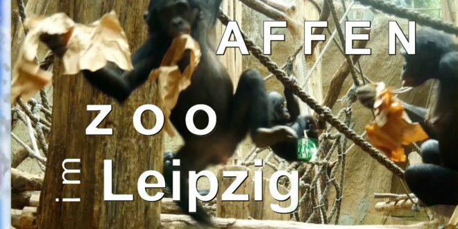 Besuch 🦧 bei den Affen im Leipziger Zoo 2020 🐒🙈🙊