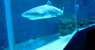 Haie Sharks Zoo Leipzig Aquarium CIMG 0029