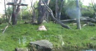 Leipziger Zoo, deel2