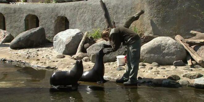 Schnelltest für die Seelöwen