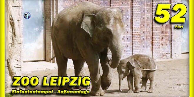 🔴 ZOO LEiPZiG • Elefantenbaby Kiran, Rani, Don Chung, Voi Nam - Taufe - зоопарк - Tiere