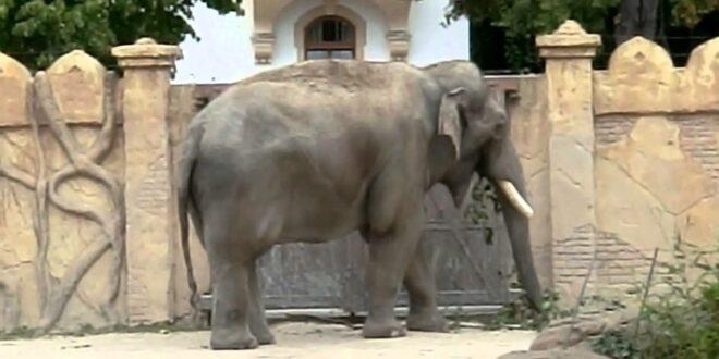 taub leipziger zoo 2012