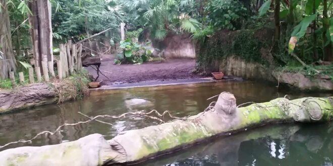 Zoo Leipzig, tropisches Paradies