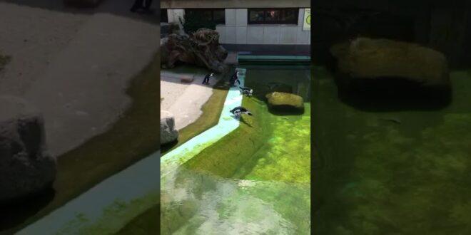 Seltsames Verhalten der Pinguine im Leipziger Zoo