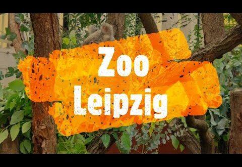 Ausflugsziele: Bezirk Leipzig: Zoo Leipzig