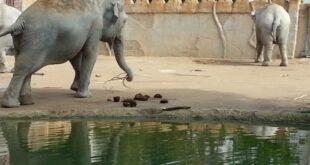 Leipziger Zoo 3