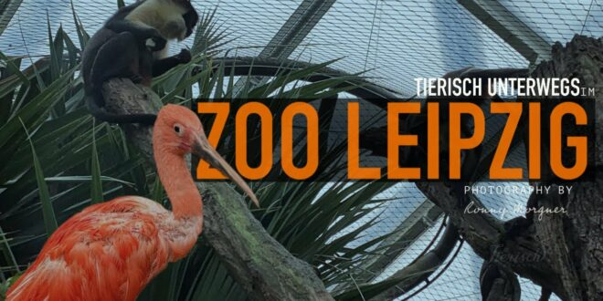 Zoo Leipzig Im Zoo Leipzig ist was los